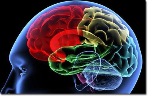 Tập luyện có thể tăng cường trí thông minh