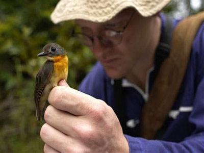 Phát hiện loài chim cổ đỏ độc nhất vô nhị