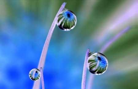 Hình hoa trong những giọt nước