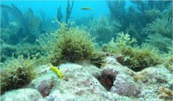 Vị cứu tinh thầm lặng của đại dương