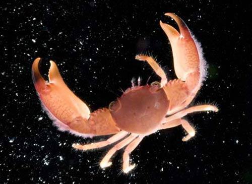 Úc phát hiện thêm 100 loài sinh vật biển mới