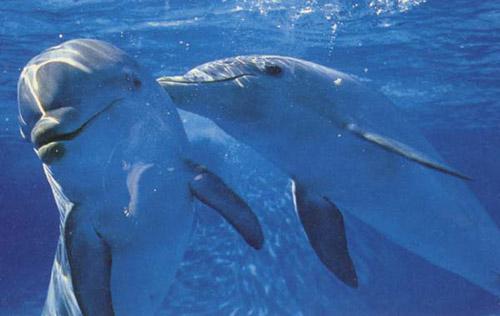Đại dương ồn ào hơn vì ô nhiễm không khí