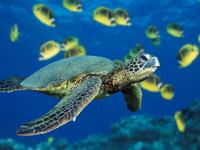 Tìm ra bí mật lớn nhất về rùa