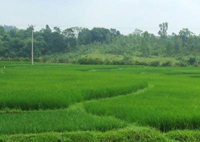 Phát triển nhiên liệu sinh học không tổn hại nông nghiệp Việt Nam