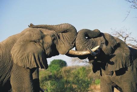 Những con vật to lớn nhất hành tinh (Phần 2)