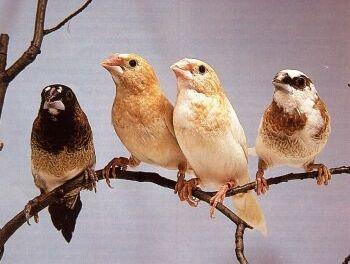 Trứng được đẻ càng sớm, chim hót càng hay