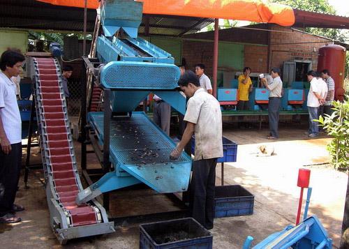 Máy cắt tách hạt điều tự động