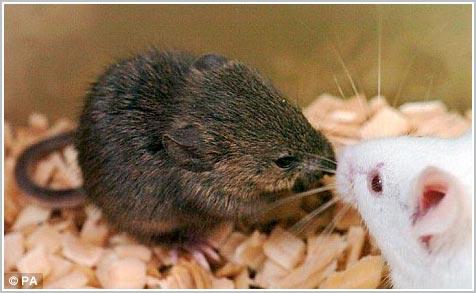Nhật nhân bản thành công tế bào chuột chết