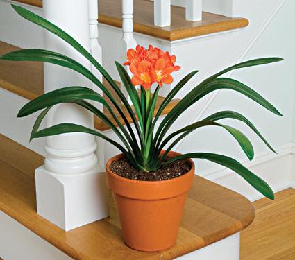 Những lợi ích của cây xanh trong nhà