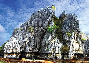 Phát hiện loài thực vật mới ở Kiên Giang