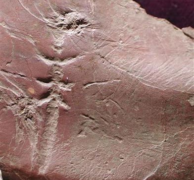 Tìm thấy dấu tích loài côn trùng cổ đại