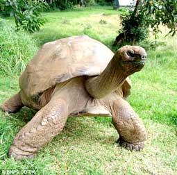 Sinh vật cao tuổi nhất thế giới