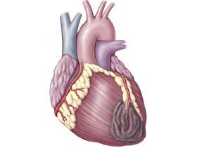 Máy đo nguy cơ bệnh tim