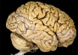 Những chuyện thú vị về khả năng não người (Phần 1)