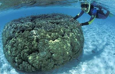 Hệ thống san hô lớn nhất thế giới bị đe dọa