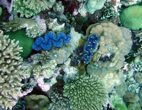 Mỹ lập khu bảo tồn biển lớn nhất thế giới