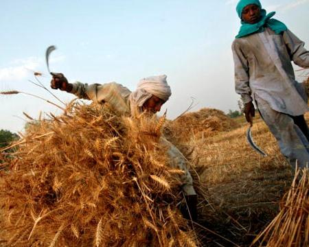 Hàng tỷ người sẽ thiếu đói vì trái đất nóng lên