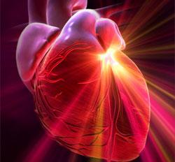 Sức khỏe tim mạch, những điều có thể bạn chưa biết