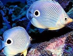 Cá giúp ngăn chặn sự ấm lên của Trái Đất