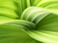 Canxi giúp thực vật tự phòng vệ