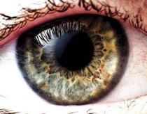 Mắt tiết lộ sức khỏe của não (Phần 1)