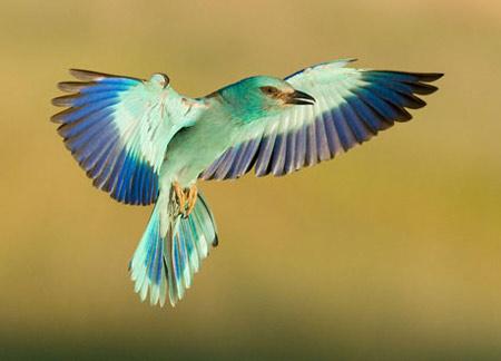 Những bức ảnh đoạt giải về chim hoang dã