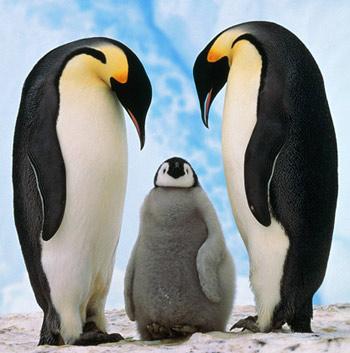 Chim cánh cụt lần đầu đẻ trứng tại Trung Quốc