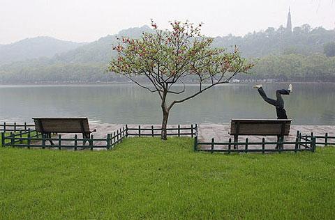 Dòng đời của một cây xanh bên hồ