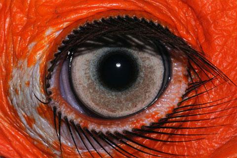 'Cửa sổ tâm hồn' trong thế giới động vật