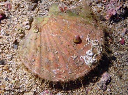 Khí thải bào mòn vỏ động vật biển