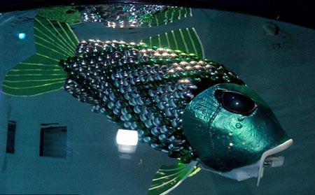 'Thám tử cá' truy tìm nguồn ô nhiễm nước