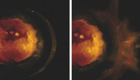 Giới khoa học bối rối vì 'siêu sao' đột tử