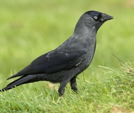 Chim hiểu được ánh mắt người