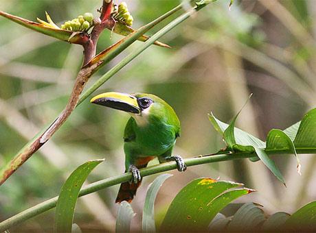Thiên đường của các loài chim