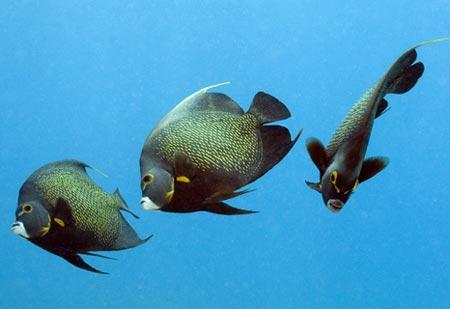 Ảnh ấn tượng về động vật dưới nước