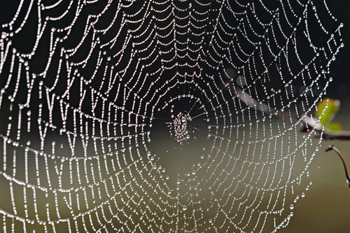 Vật liệu siêu bền từ tơ nhện