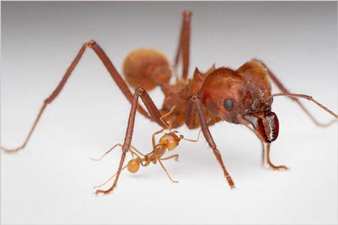 Khám phá cuộc sống của loài kiến qua ảnh