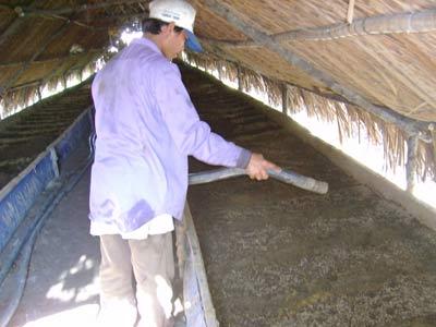 Chế phẩm sinh học từ trùn quế