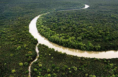 Sức sống rừng nhiệt đới