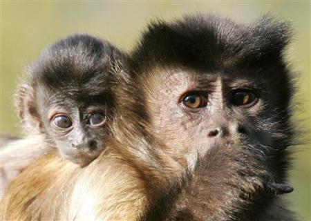 'Ngày của mẹ' trong thế giới động vật