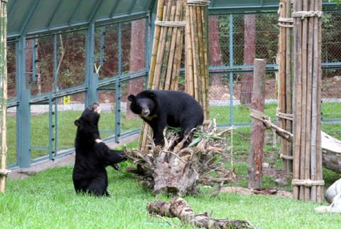 Khu bán hoang dã đầu tiên dành cho gấu ở Việt Nam