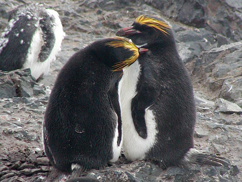 Cuộc sống bí mật của chim cánh cụt