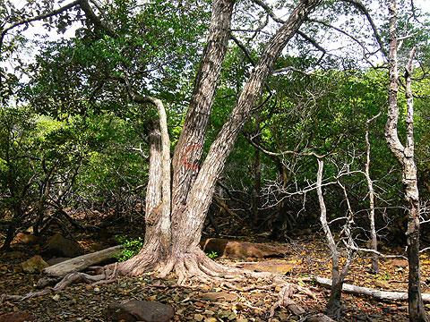 Đa dạng sinh học ở Côn Đảo chờ bảo tồn