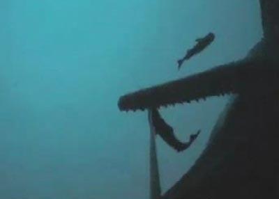 Cá nhà táng ăn trộm của người