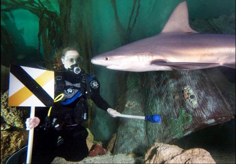 Bắt cá mập phải 'khúm núm' trước con người
