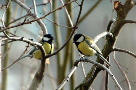 Chim nông thôn khó 'lấy vợ' thành thị