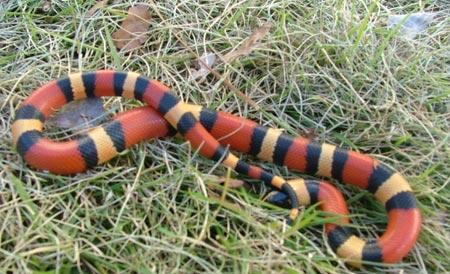Giải mã bí ẩn về khả năng trườn của rắn
