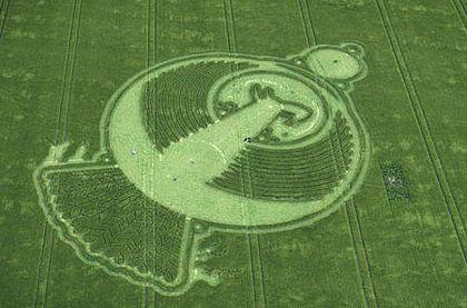 Vòng tròn chim phượng hoàng hiện hình trên cánh đồng