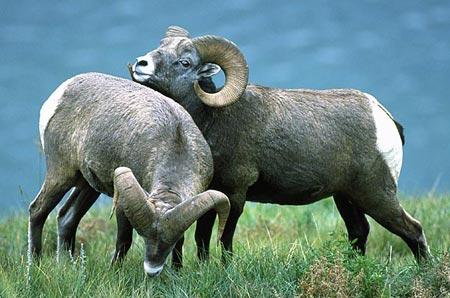 Những loài động vật có thể bị đồng tính