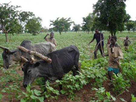 Châu Phi đủ đất để nuôi cả thế giới
